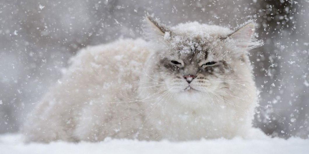 snig.jpeg