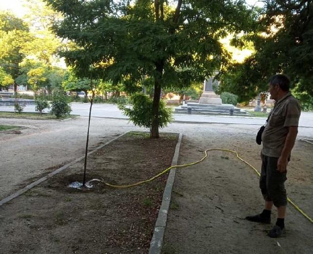 В Херсоне коммунальщики полили деревья без листьев